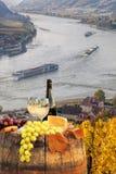 Vitt vin med trumman på vingård i Wachau, Spitz, Österrike royaltyfri foto