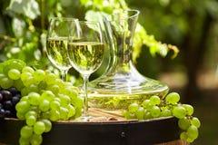 Vitt vin med vinglaset och druvor på trädgårds- terrass Arkivbild