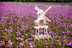 Vitt windmill- och lavendelfält Arkivbild
