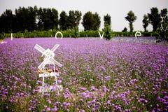 Vitt windmill- och lavendelfält royaltyfria bilder