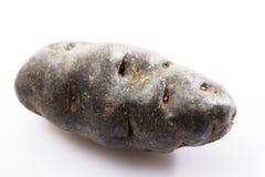Vittelotte potato Stock Photo