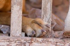 Vittima del cane di abuso e di maltrattamento animali fotografie stock libere da diritti