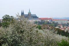 vitus του ST άνοιξη της Πράγας καθεδρικών ναών Στοκ Εικόνες