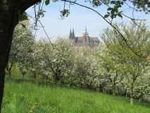 vitus του ST άνοιξη της Πράγας καθεδρικών ναών Στοκ εικόνα με δικαίωμα ελεύθερης χρήσης