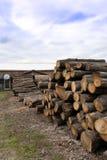 Viu logs, árvores foto de stock royalty free