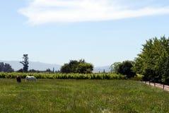 Viu Manent酿酒厂葡萄园  免版税库存图片