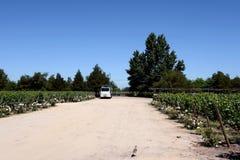 Viu Manent酿酒厂葡萄园  库存图片