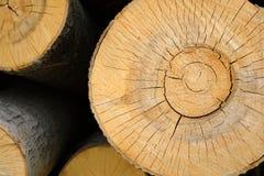Viu o corte de uma árvore, close up imagem de stock