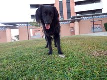 Viva come i cani Fotografia Stock Libera da Diritti