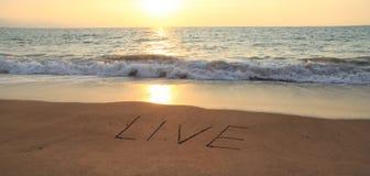 Viva nella sabbia fotografie stock