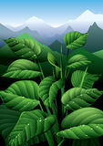 Vivacité de nature illustration de vecteur