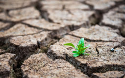Vivant avec la sécheresse, arbre rené, la terre criquée photos libres de droits
