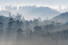 Vivant, brume de matin au-dessus du Ghats occidental, Inde image libre de droits