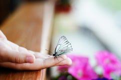 vive la mariposa blanca en la mano del ` s de los niños Imagen de archivo libre de regalías