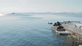 Viveiro dos leões de mar perto da cidade de Kamchatka vídeos de arquivo