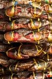 Viven los cangrejos listos para ser cocinado Fotos de archivo libres de regalías