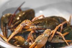 Viven los cangrejos verdes en un plato grande antes de cocinar Primer imagenes de archivo