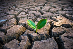Vivendo con la siccità dell'albero fotografie stock libere da diritti