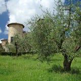 Vivendo in Toscana Fotografia Stock Libera da Diritti