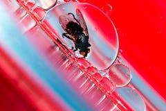 Vivendo in una bolla Fotografia Stock Libera da Diritti