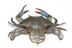Vivent le crabe photos stock