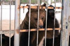 Vivent les ours derrière des grilles d'une cage Photo libre de droits
