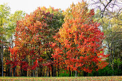 Vivid Autumn Color. Autumn busting with vivid color in the West Virginia mountains Stock Photos