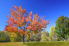 Vivid Autumn Colors Royalty Free Stock Photography