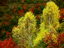 Vivid autumn colors Stock Images