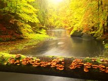 Vivid autumn. Colors of autumnal river in forest. Colorful banks with leaves, leaves trees Stock Photography