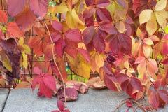 Vivid autumn foliage Royalty Free Stock Photos