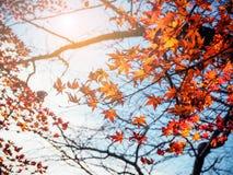 Vivid autumn natural background Royalty Free Stock Photo