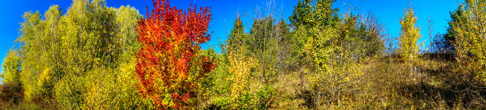 Vivid autumn panoramic landscape. Stock Photography