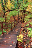 Vivid Autumn Scenery. Staircase winds through a myriad of fall colors at Kishaukee Gorge Forest Preserve in northern Illinois Royalty Free Stock Images