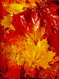 Vivid autumnal background Stock Photography