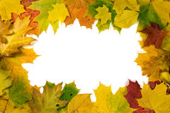 Vivid autumnal leaves frame Royalty Free Stock Photos