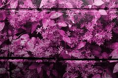 Pink/purple patterned glazed kitchen tiles in closeup view stock photos