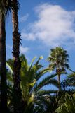 Vivid blue sky and green trees in Morocco royalty free stock photos
