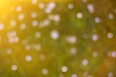 Vivid blurred green field with flowers summer background stock photography