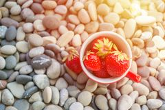 Vivid bright summer time concept with fresh organic red strawberry in red cup on background of gray round smooth sea pebbles. Top. View, flat lay royalty free stock image