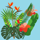 Vivid bunch of different tropical flowers and plants. Royalty Free Stock Photo