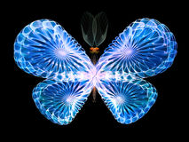Vivid Butterfly Royalty Free Stock Image