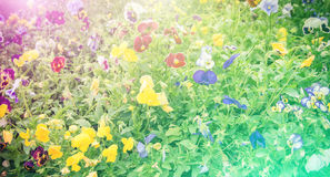 Vivid color beautiful wild flowers in soft style. Stock Photography