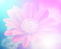 Vivid color beautiful wild flowers in soft style. Stock Photos