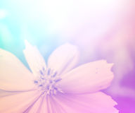 Vivid color beautiful wild flowers in soft style. Royalty Free Stock Photography