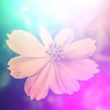 Vivid color beautiful wild flowers in soft style. Stock Photo