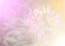 Vivid color beautiful wild flowers in soft style. Stock Images