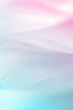 Vivid color flower petals in soft color and blur style Royalty Free Stock Image