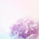 Vivid color  flower in soft and blur style on mulberry paper texture Royalty Free Stock Photography