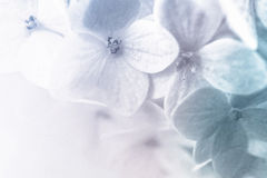 Vivid color flowers in soft and blur style on mulberry paper texture Stock Photo
